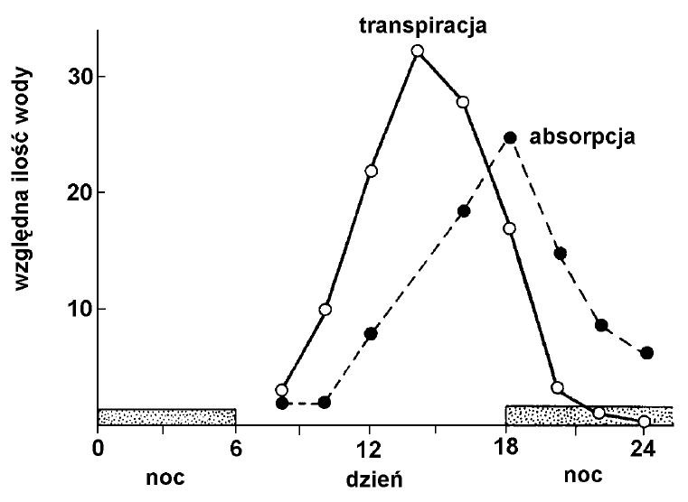 Bilans transpiracji i absorpcji wody.