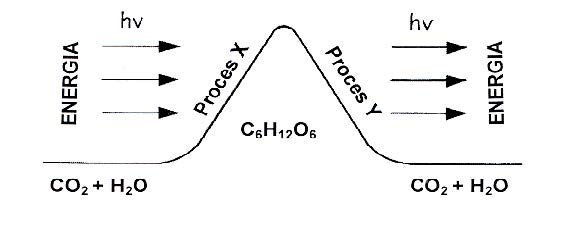 Typy reakcji metabolicznych.