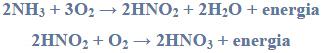 Udział bakterii nitryfikacyjnych w obiegu azotu w przyrodzie.