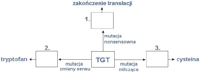 Rodzaje mutacji: nonsensowna, milcząca i zmiany sensu.