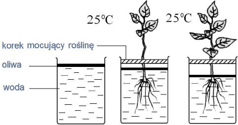 Badanie transpiracji. Zależność intensywności parownia wody od różnych czynników.