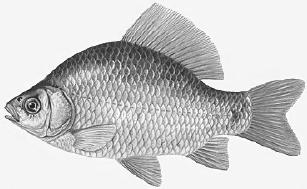Porównanie budowy ryby i ptaka. Adaptacje do pokonywania oporu środowiska.