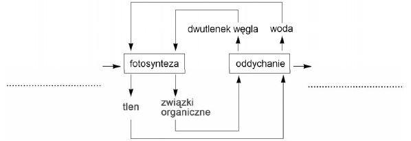 Przekształcanie energii w procesie oddychania komorkowego i fotosyntezy
