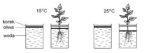 Badanie czynników wpływających na transpirację