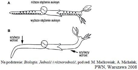 Reakcje geotropowe pędu i korzenia