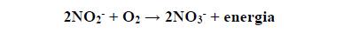 Bakterie nitryfikacyjne. Przekształcanie amoniaku.