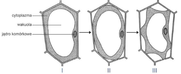 Stężenie roztwóru względem komórki (soku komórkowego)..