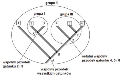 Taksn monofiletyczny. Takson parafiletyczny. Takson polifiletyczny.
