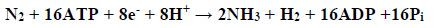 Znaczenie wiązania azotu atmosferycznego przez sinice.