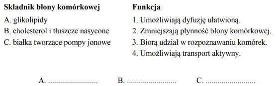 Składniki błony komórkowej i ich funkcje.