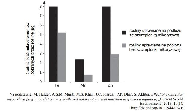 Mikoryzacja, a wchłanianie mikroelementów z roztworu glebowego.
