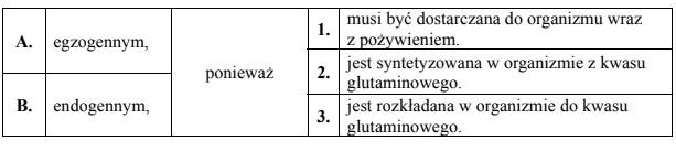 Rola glutaminy w organizmie człowieka.