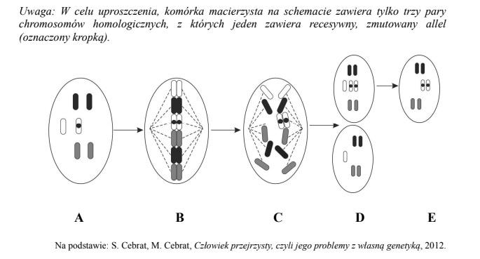 Recesywna mutacja genu RB1 może prowadzić do rozwinięcia się siatkówczaka – groźnego nowotworu siatkówki oka.