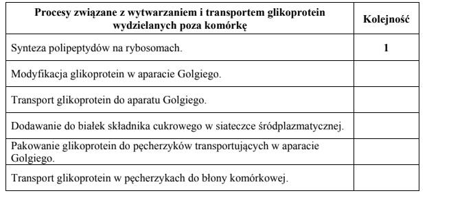 Wytwarzanie i transport glikoprotein.