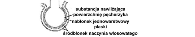 Substancja powierzchniowo czynna w pęcherzykach płucnych (surfaktant).