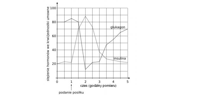 Regulacja pozimu glukozy we krwi poprzez działanie insuliny i glukagonu.