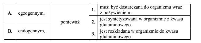 Znaczenie transportu jonów amonowych w postaci glutaminy.