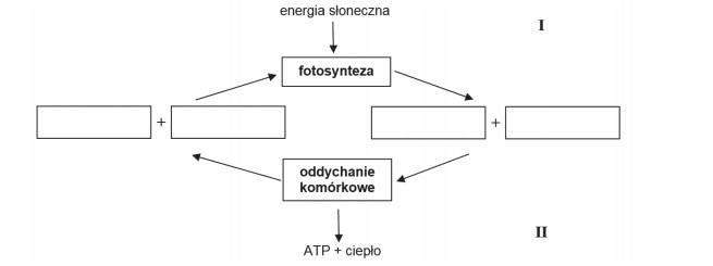 Przekształcenia zachodzące podczas przemian metabolicznych.