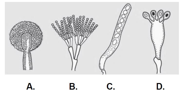 Endofity to symbiotyczne grzyby, głównie workowce…