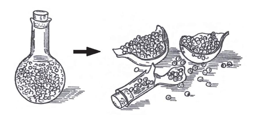Imbibicja. Proces pęcznienia nasion.