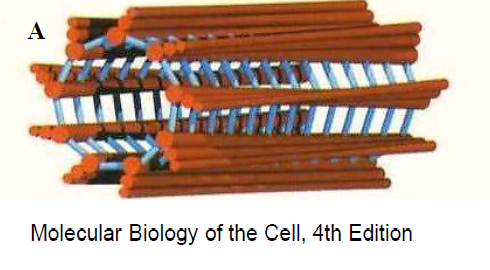 Centriola w komórce.