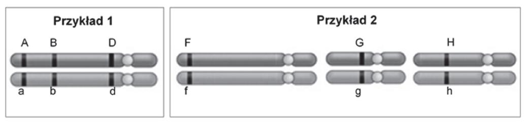 Podaj nazwę procesu zachodzącego w czasie mejozy, dzięki któremu w gametach może wystąpić osiem różnych kombinacji alleli wyszczególnionych genów