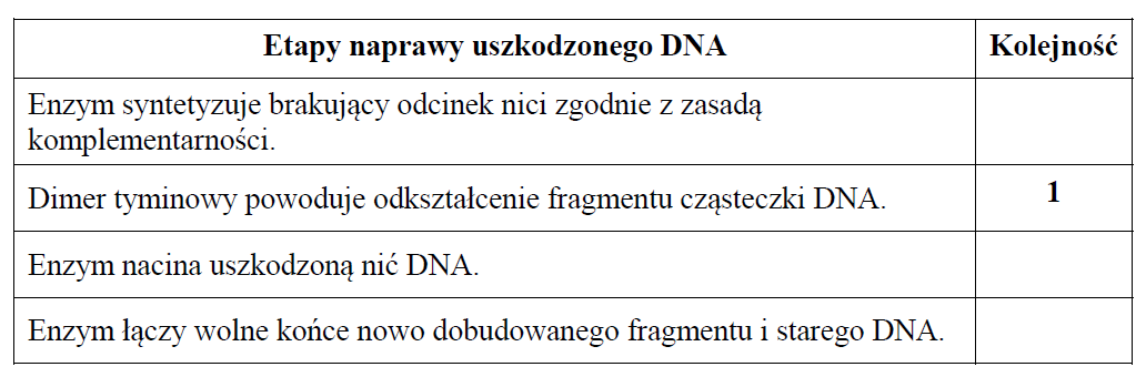Etapy naprawy uszkodzonego DNA.